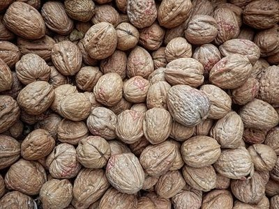 Walnuts are great for memory