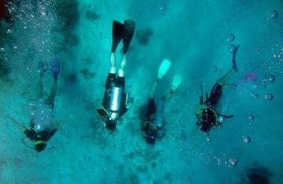 Scuba Diving Marine Biology Research