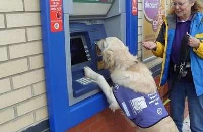 Assistance dog cash machine card removal