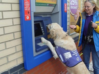 Assistance dog cash machine card removal February Charity