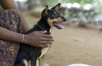 Robyn rescue dog