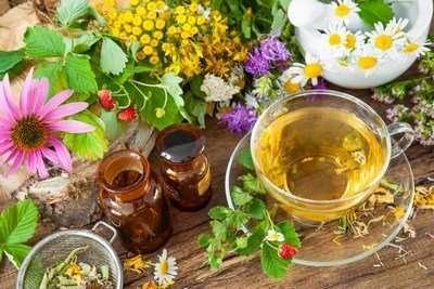 herbal medicine diploma